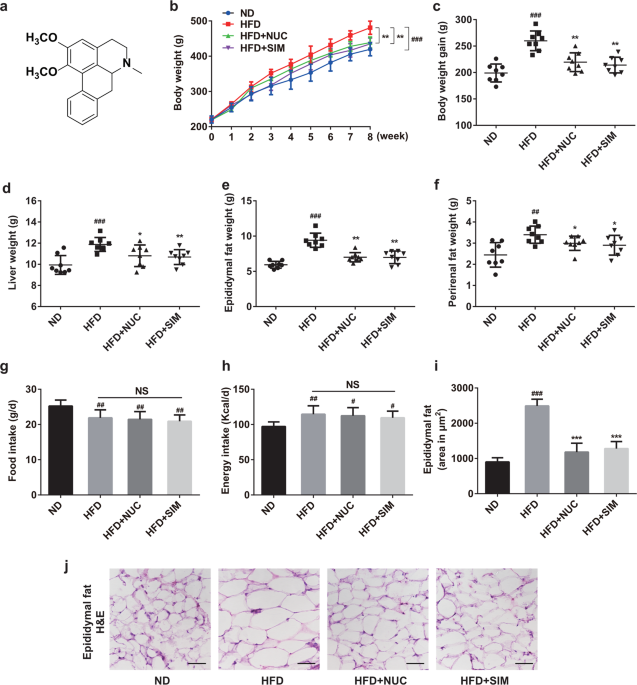 Nuciferine modulates the gut microbiota and prevents obesity in high-fat diet-fed rats