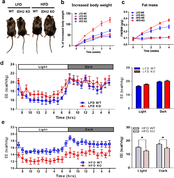 sirt1 protects against high-fat diet-induced metabolic damage
