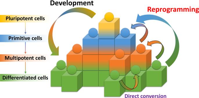 Small-molecule-mediated reprogramming: a silver lining for regenerative medicine