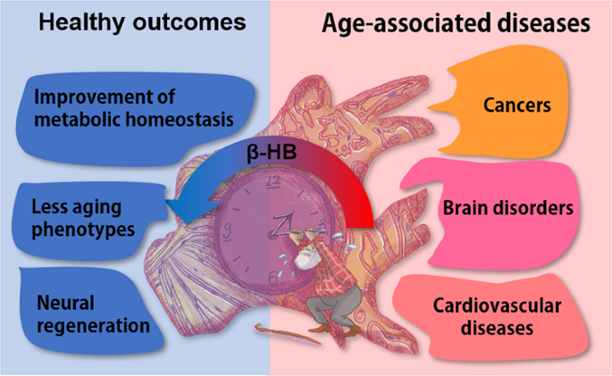 β-hydroxybutyrate and its metabolic effects on age-associated pathology