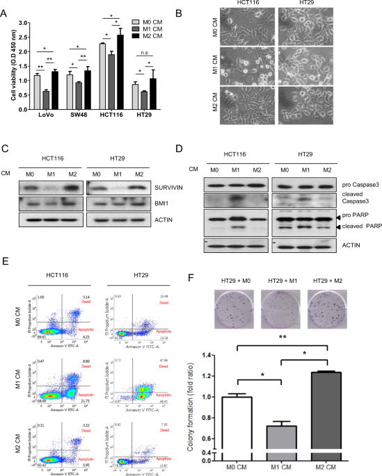 The FBW7-MCL-1 axis is key in M1 and M2 macrophage-related colon cancer cell progression: validating the immunotherapeutic value of targeting PI3Kγ