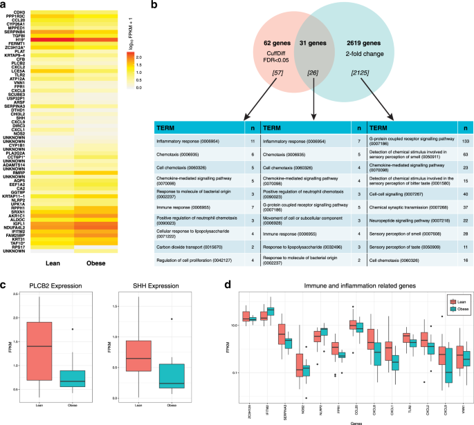 2ef76b0b9a1 Analysis of differentially expressed (DE) genes between lean and obese  human fungiform papillae groups. a Heat map of the 62 DE genes identified  through ...