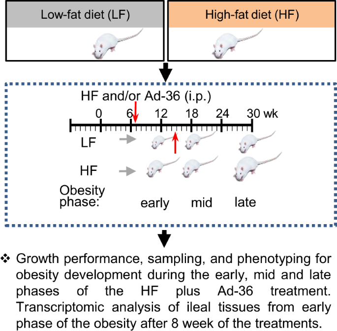 Ileal Transcriptome Analysis In Obese Rats Induced By High Fat Diets And An Adenoviral Infection International Journal Of Obesity