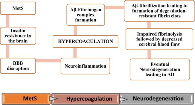 Targeting hypercoagulation to alleviate Alzheimer's disease progression in metabolic syndrome - International Journal of Obesity