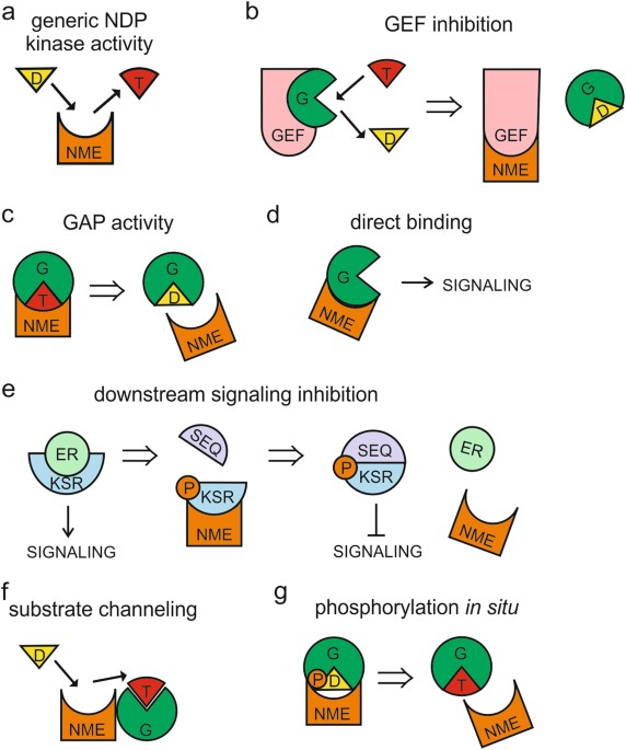 Modulation Of Small GTPase Activity By NME Proteins