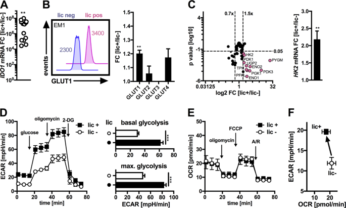 Inflammation-induced glycolytic switch controls