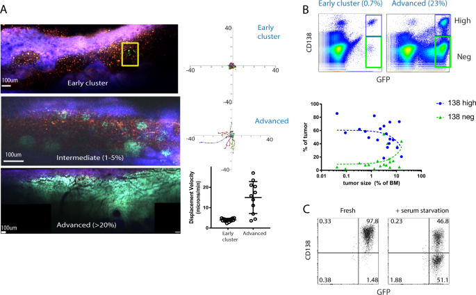 Dynamic CD138 surface expression regulates switch between