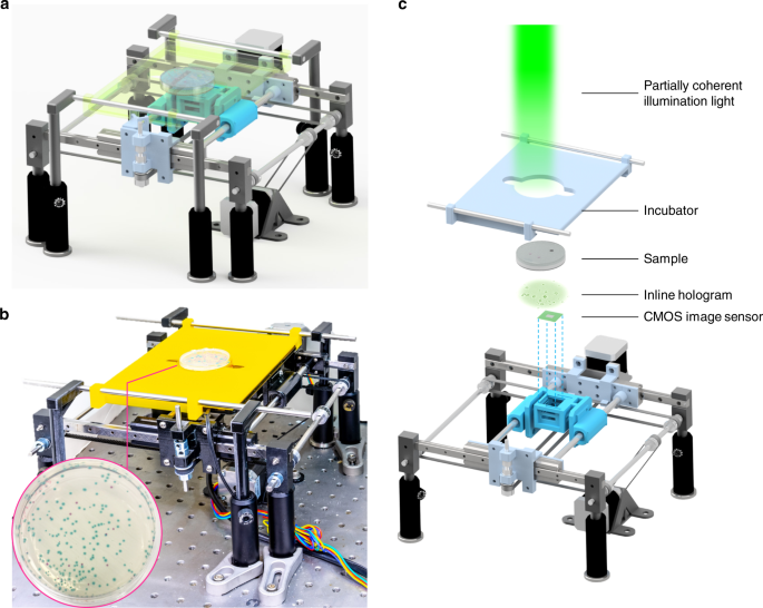 Early detection and classification of live bacteria using time-lapse coherent imaging and deep learning
