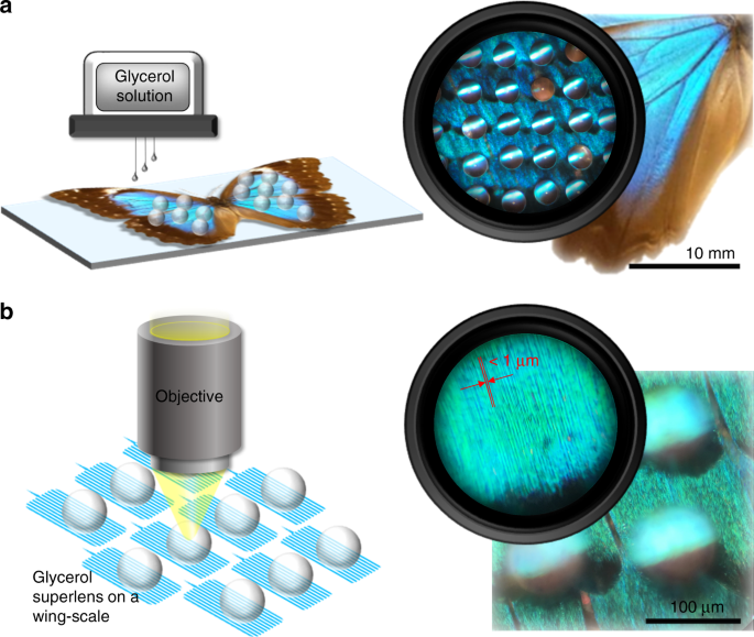 In situ printing of liquid superlenses for subdiffraction-limited color imaging of nanobiostructures in nature