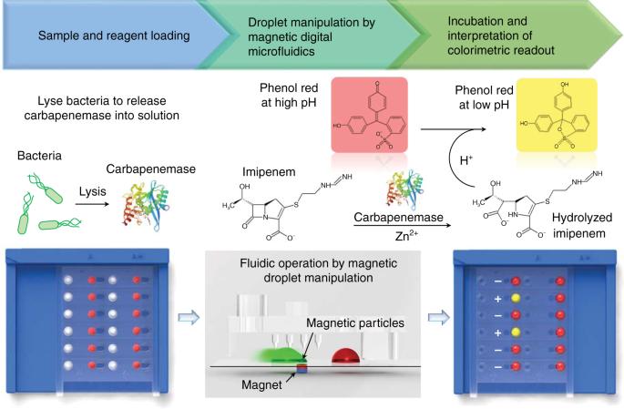 A 3D-printed magnetic digital microfluidic diagnostic platform for rapid colorimetric sensing of carbapenemase-producing Enterobacteriaceae