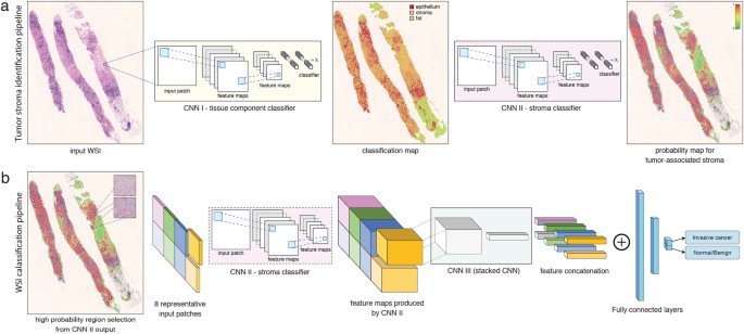 Using deep convolutional neural networks to identify and