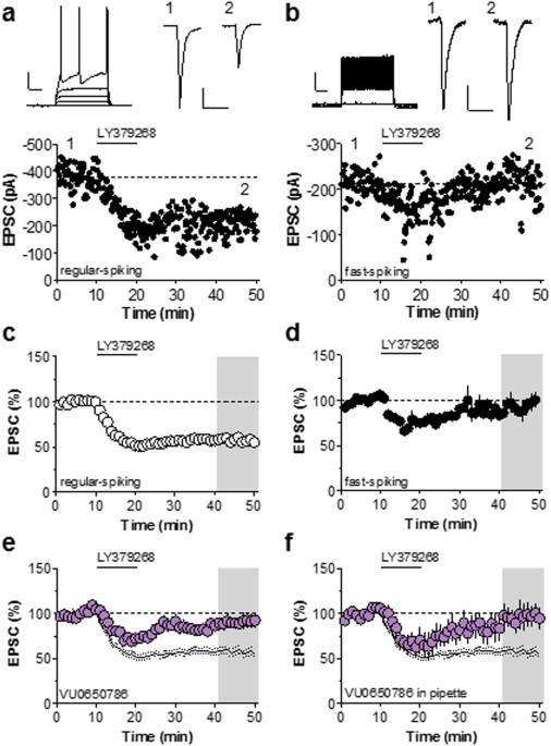 metabotropic glutamate receptor subtype 3 gates acute stress induced rh nature com