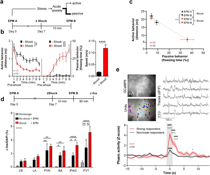 stress peptides sensitize fear circuitry to promote passive coping