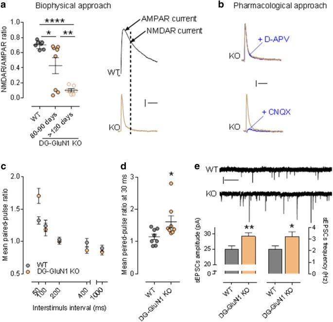 Reduced Glun1 In Mouse Dentate Gyrus Is Associated With Ca3