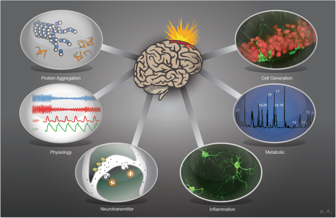 Neurotransmitter changes after traumatic brain injury: an update for