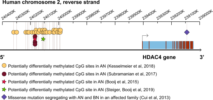 Histone deacetylase 4 (HDAC4): a new player in anorexia nervosa?