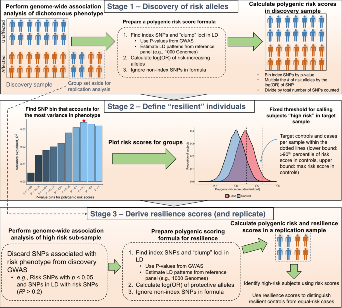A polygenic resilience score moderates the genetic risk for