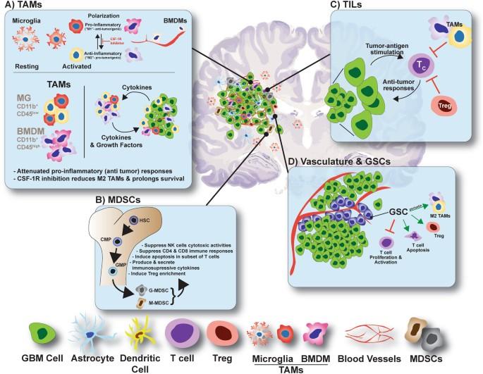 Immunotherapies for malignant glioma | Oncogene