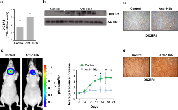 Impaired microRNA processing by DICER1 downregulation endows thyroid cancer with increased aggressiveness