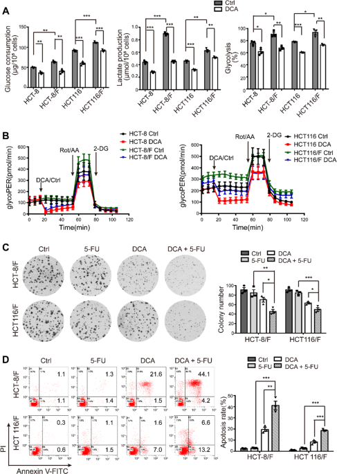 Dichloroacetate Restores Colorectal Cancer Chemosensitivity Through The P53 Mir 149 3p Pdk2 Mediated Glucose Metabolic Pathway Oncogene