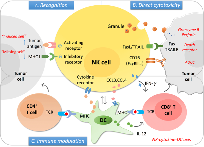 The role of natural killer cell in gastrointestinal cancer: killer or helper