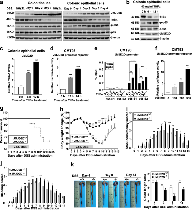 Inflammation-induced JMJD2D promotes colitis recovery and colon tumorigenesis by activating Hedgehog signaling