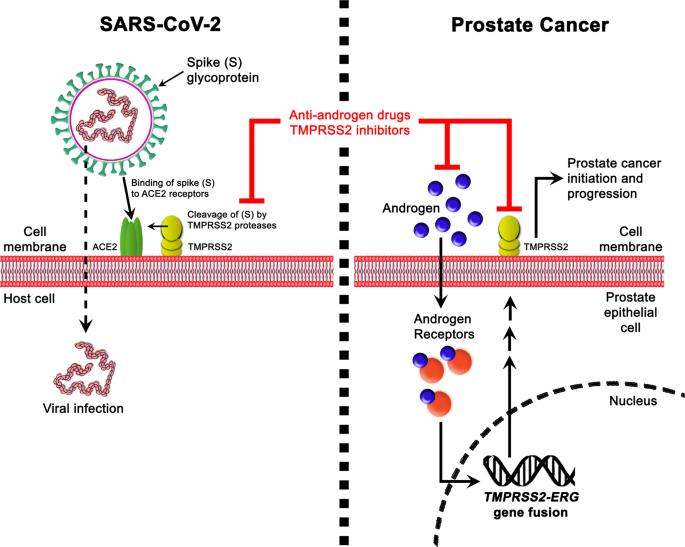 anti prostatitis nano