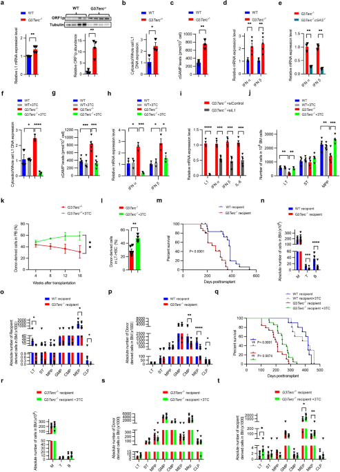 L1 drives HSC aging and affects prognosis of chronic myelomonocytic leukemia