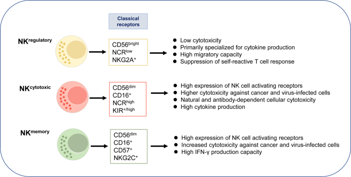 Immune checkpoint molecules in natural killer cells as potential targets for cancer immunotherapy