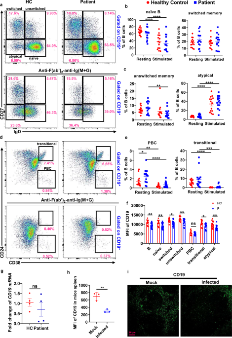 SARS-CoV-2 infection causes immunodeficiency in recovered patients by downregulating CD19 expression in B cells via enhancing B-cell metabolism - Signal Transduction and Targeted Therapy