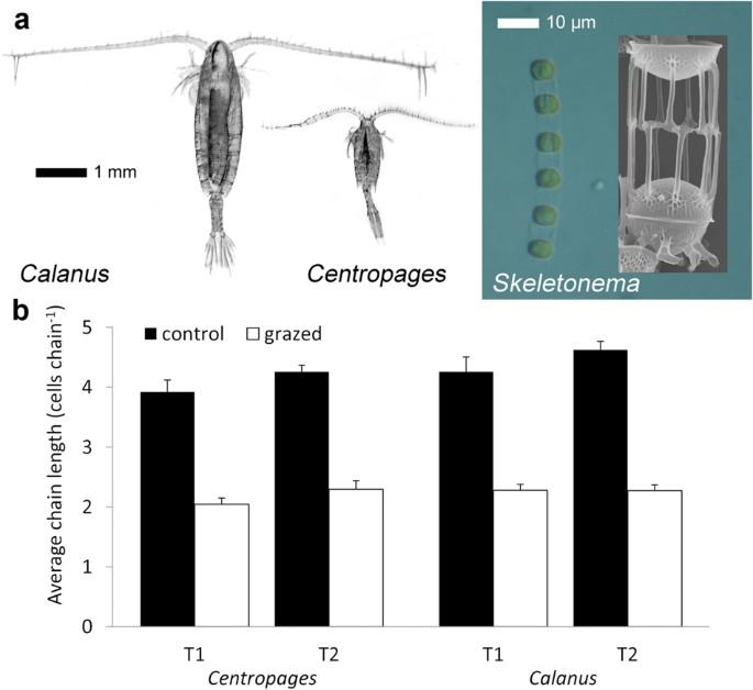 ectomorf macrocomenzile de pierdere a grăsimilor ați pierdut greutatea pe yasmin