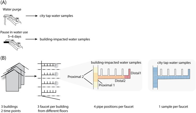 Drinking water microbiome assembly induced by water stagnation | The