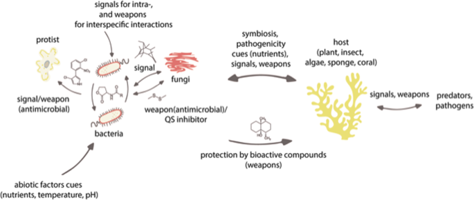 Microbe-driven chemical ecology: past, present and future