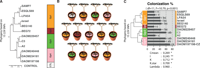 Genetic variation and evolutionary history of a mycorrhizal fungus regulate the currency of exchange in symbiosis with the food security crop cassava