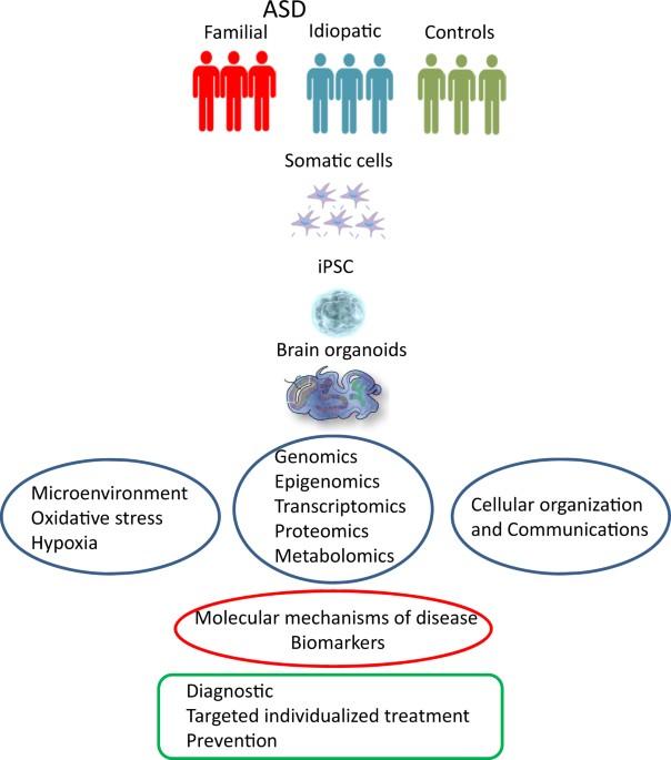 Study Links Autism To Epigenetic >> Epigenetics And Cerebral Organoids Promising Directions In Autism