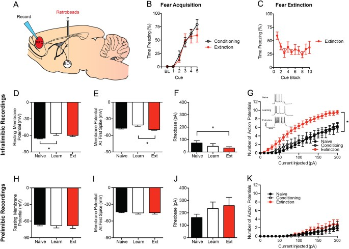 fear extinction requires infralimbic cortex projections to the