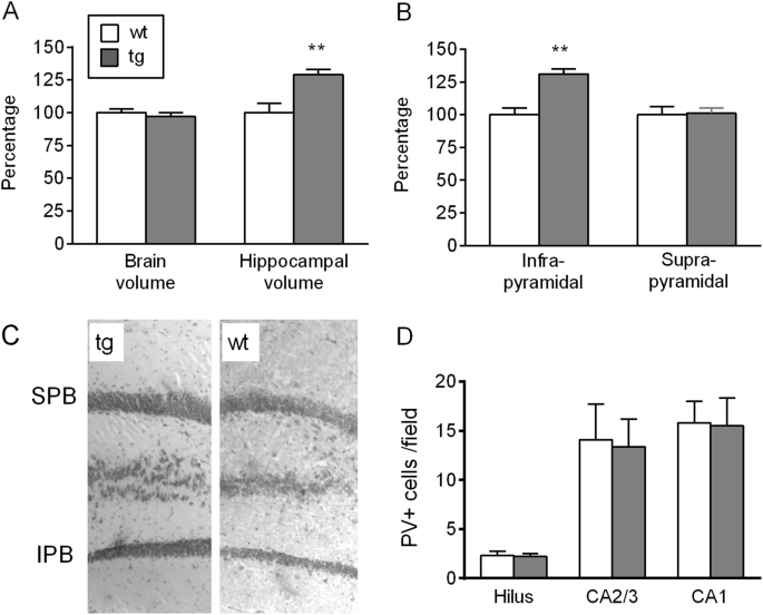 Altered hippocampal gene expression and structure in transgenic mice overexpressing neuregulin 1 (<i>Nrg1</i>) type I