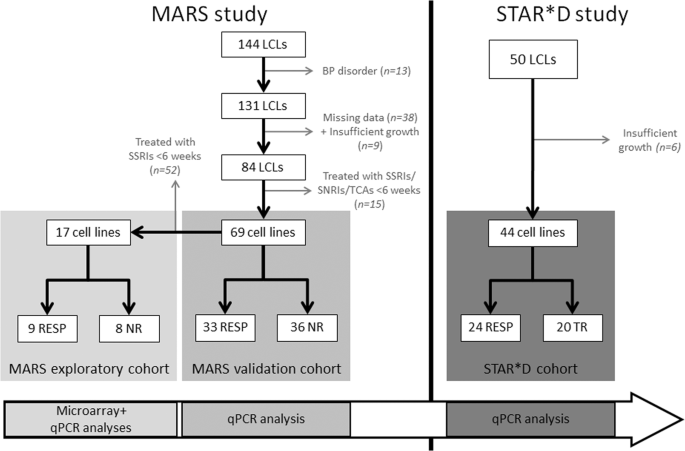 Citalopram-induced pathways regulation and tentative treatment-outcome-predicting biomarkers in lymphoblastoid cell lines from depression patients