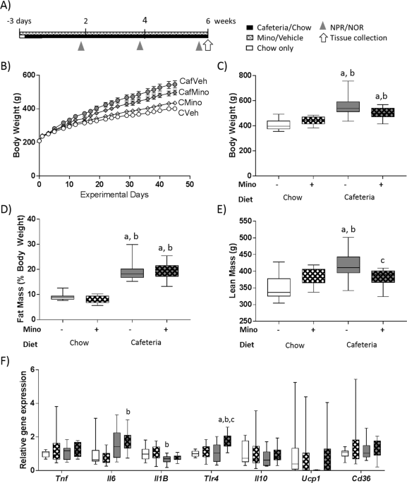 Minocycline-induced microbiome alterations predict cafeteria diet-induced spatial recognition ...
