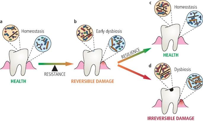 Dysbiosis uk, Kerek paraziták elleni gyógyszerek