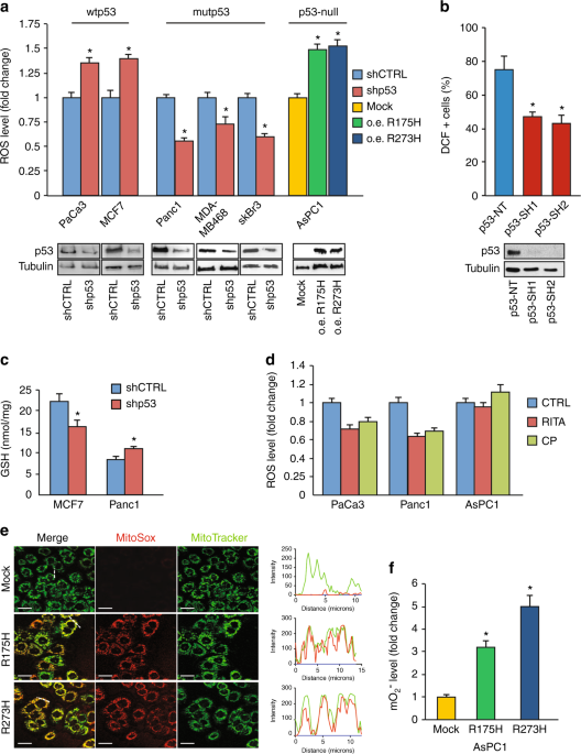 Mutant p53 blocks SESN1/AMPK/PGC-1α/UCP2 axis increasing mitochondrial O<sub>2ˉ</sub>· production in cancer cells
