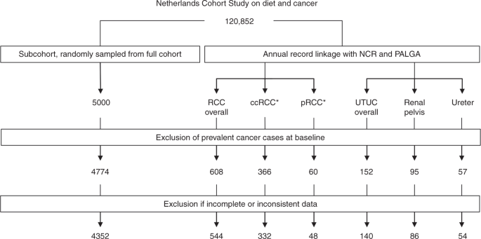 Kidney Stones And The Risk Of Renal Cell Carcinoma And Upper Tract Urothelial Carcinoma The Netherlands Cohort Study British Journal Of Cancer