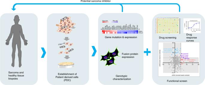 Sarcoma cancer gene. Bone Cancer, Primary Bone Cancers and Bone Metastases Sarcoma cancer genetic