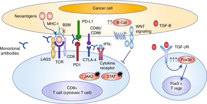 cancer colorectal mmr