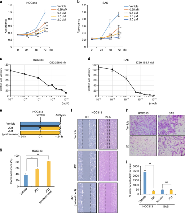BRD4 promotes metastatic potential in oral squamous cell carcinoma through the epigenetic regulation of the MMP2 gene