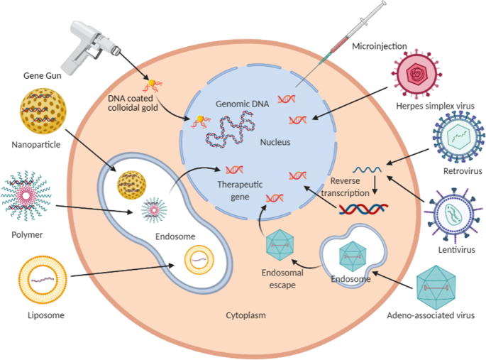 hpv gene therapy