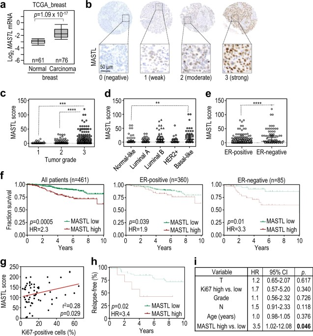 Therapeutic relevance of the PP2A-B55 inhibitory kinase MASTL ...