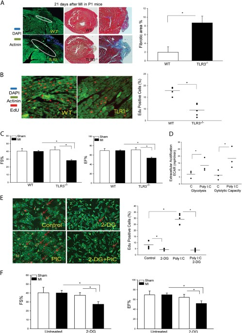 TLR3 Mediates Repair and Regeneration of Damaged Neonatal