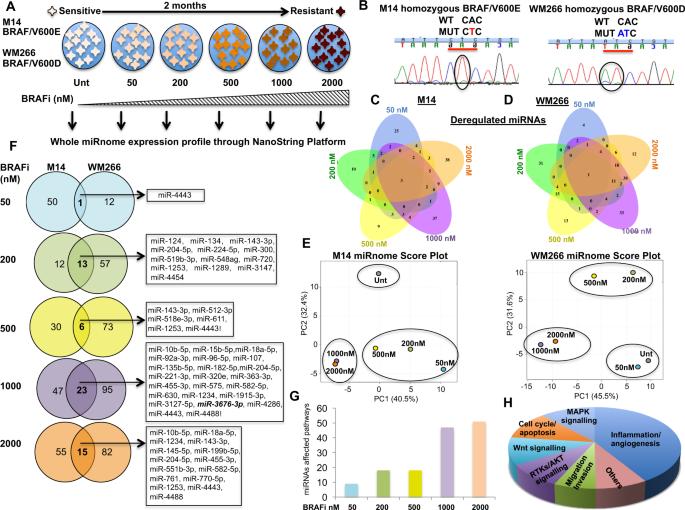 Reprogramming miRNAs global expression orchestrates