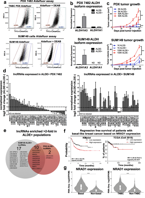 ALDH1A3-regulated long non-coding RNA NRAD1 is a potential novel target for triple-negative breast tumors and cancer stem cells